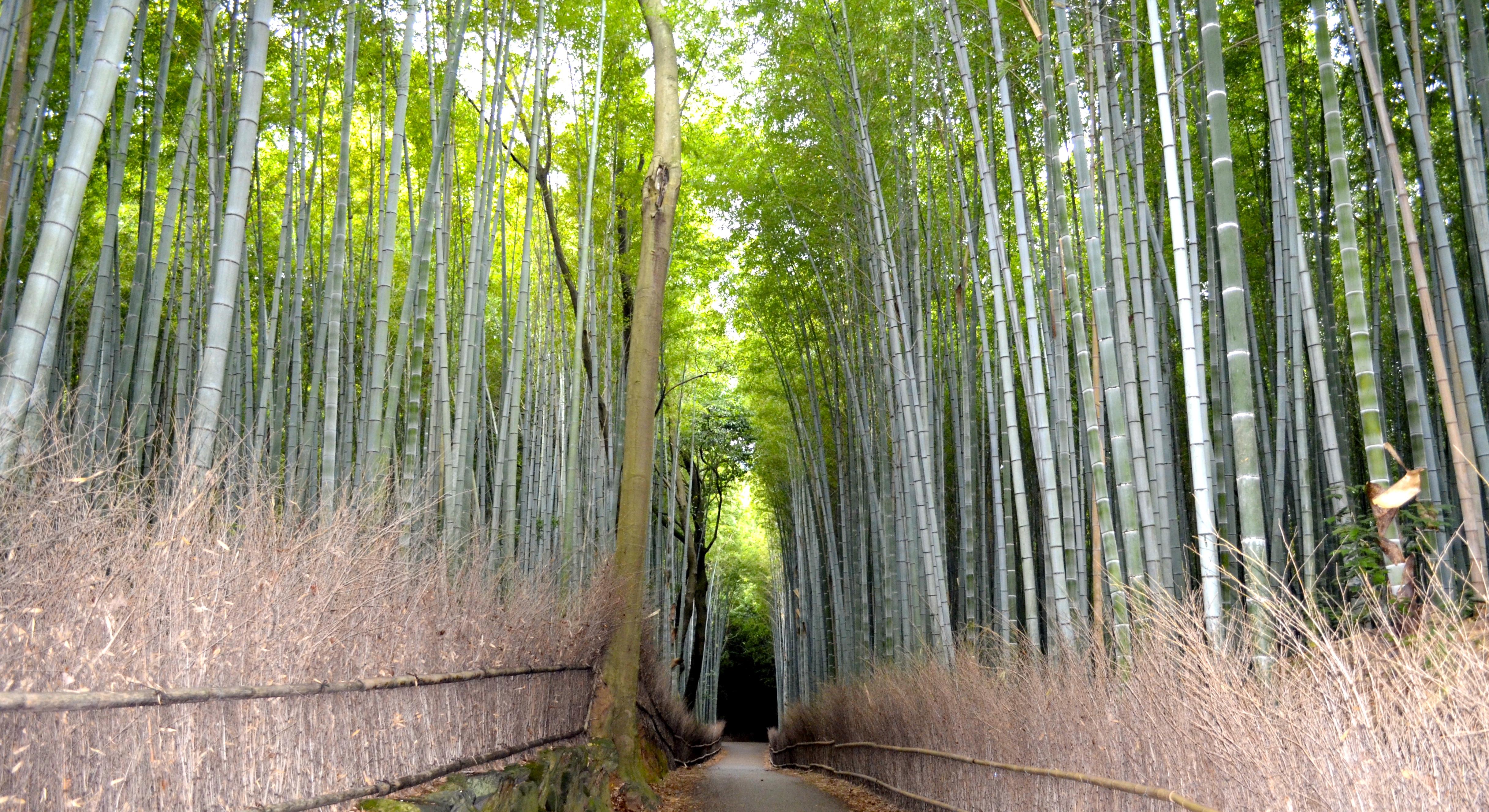 Awe Inspiring Kyoto Safiriz Your Holiday Ideas